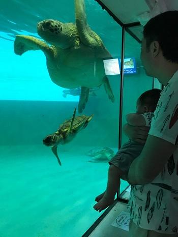 kumejima-turtule-aquarium-1