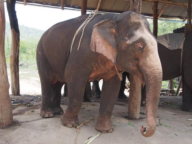 karen-elephant-camp-pai-2