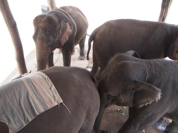karen-elephant-camp-pai-3