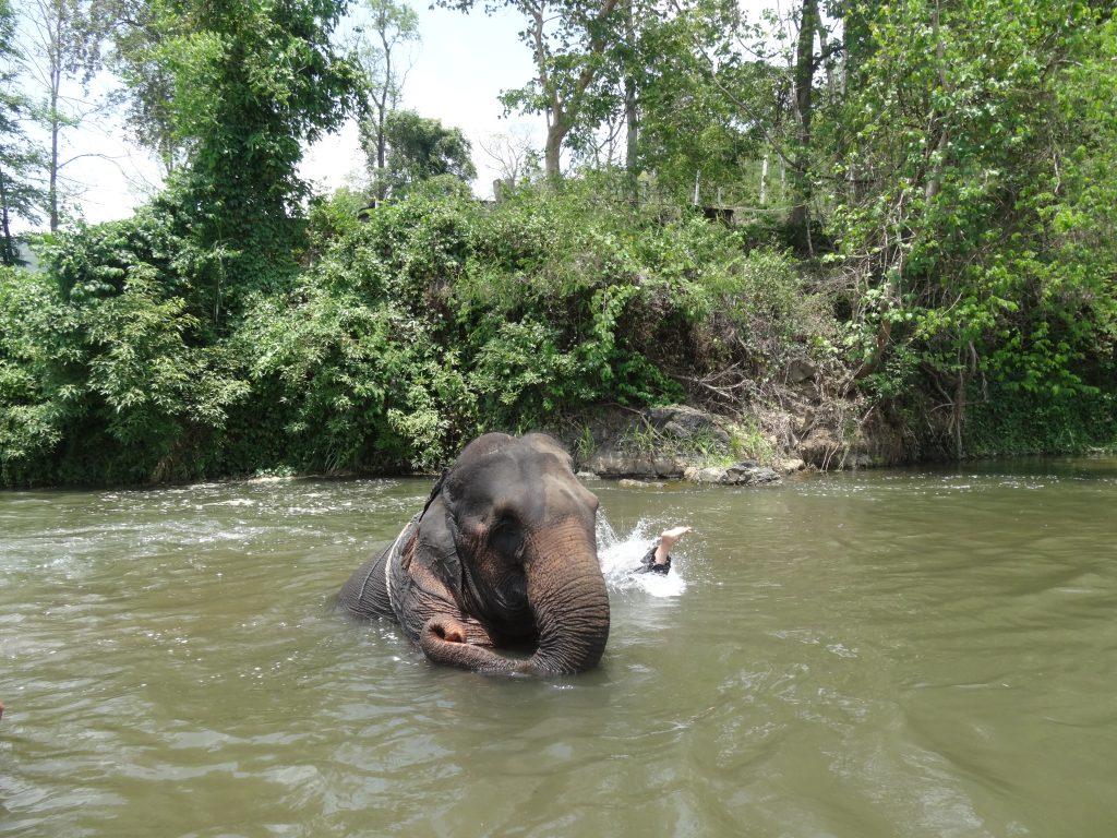 karen-elephant-camp-pai-8