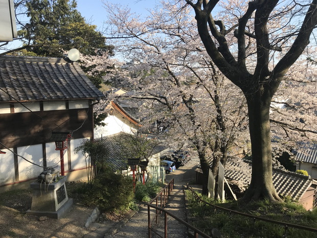 himeji-otokoyama-haisuichi-park-7