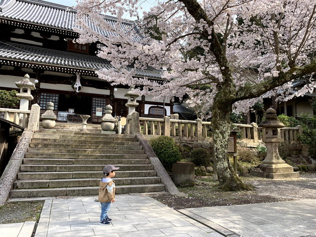 arima-hot-spring-sakura-spots-5